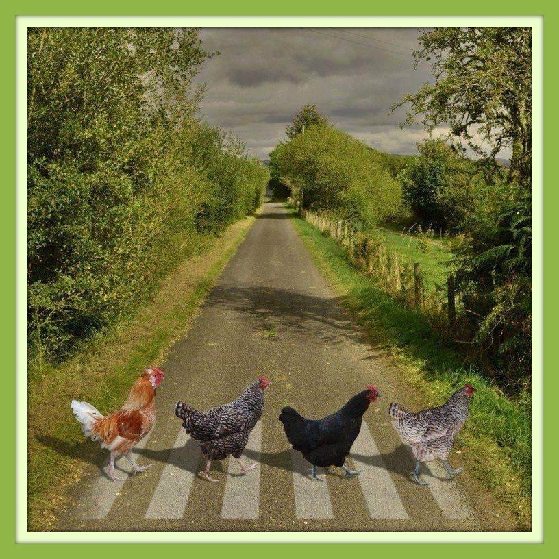 Beatles Chicken