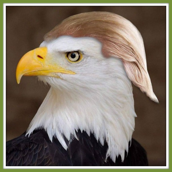 The eagle has blonded!