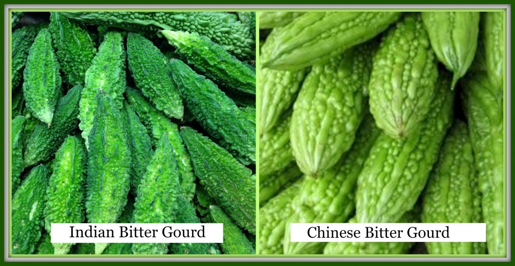 The two popular types of Asian bitter gourd available in our local market - Indian and Chinese.