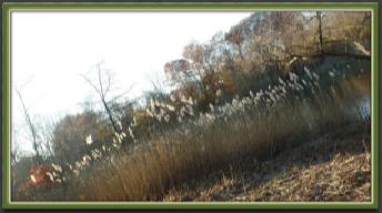 WildernessSeason1fr300