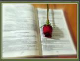 biblewdrose350